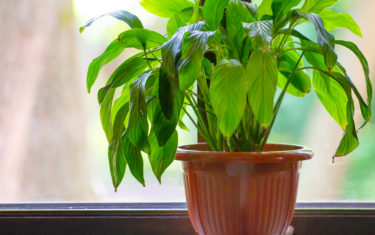 FREE SEMINAR // HOW TO CARE FOR YOUR INDOOR PLANTS THIS FALL