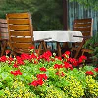 hardy-geraniums-perennials