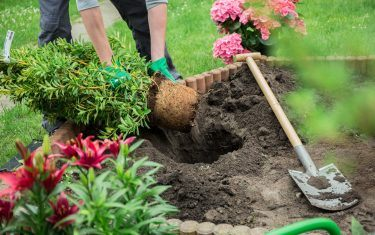 Gardening Pics monthly gardening tips - delhi