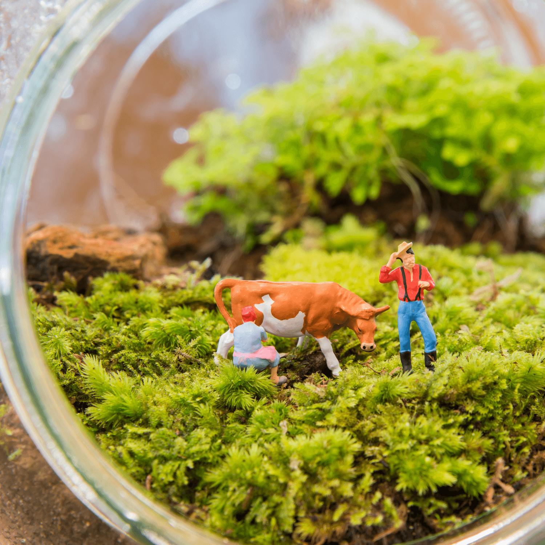 Fairy miniature gardens delhi for Indoor gardening lesson